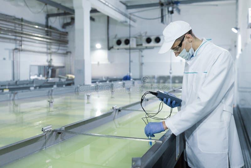 Mann in einer wei?en Robe und eine Kappe machen eine Inspektion von den Milchprodukten lizenzfreies stockfoto