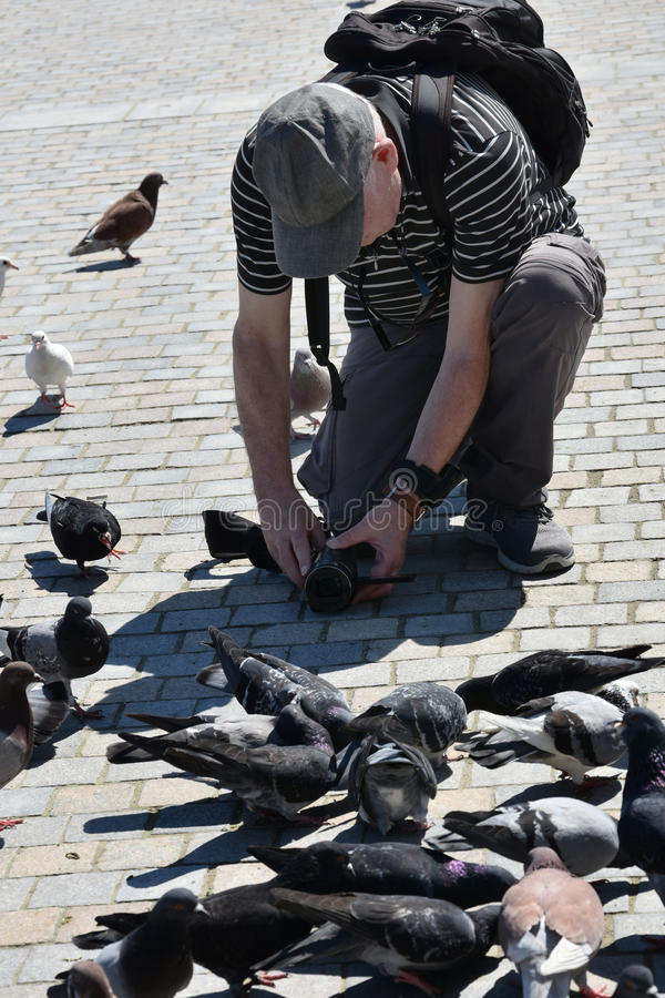 Mann filmt Tauben lizenzfreie stockbilder