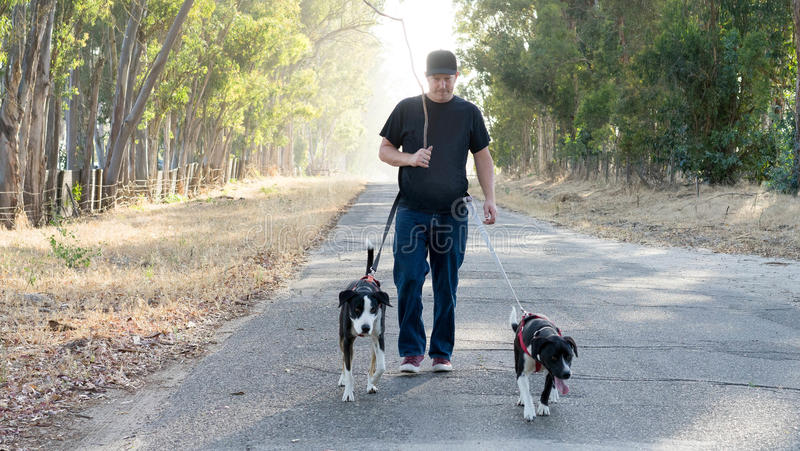 Mann-gehende Hunde auf Land-Straße stockbild