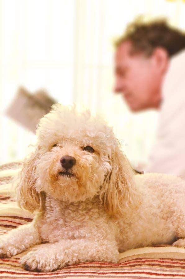 Mann-Hund und Zeitung stockfotos