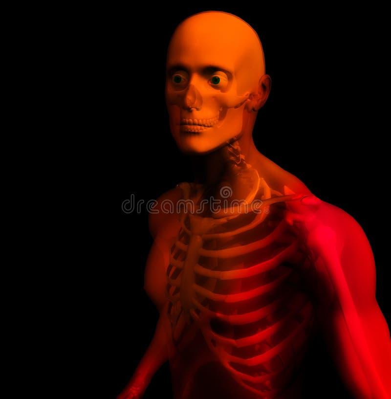 Mann-Knochen 14 lizenzfreie abbildung