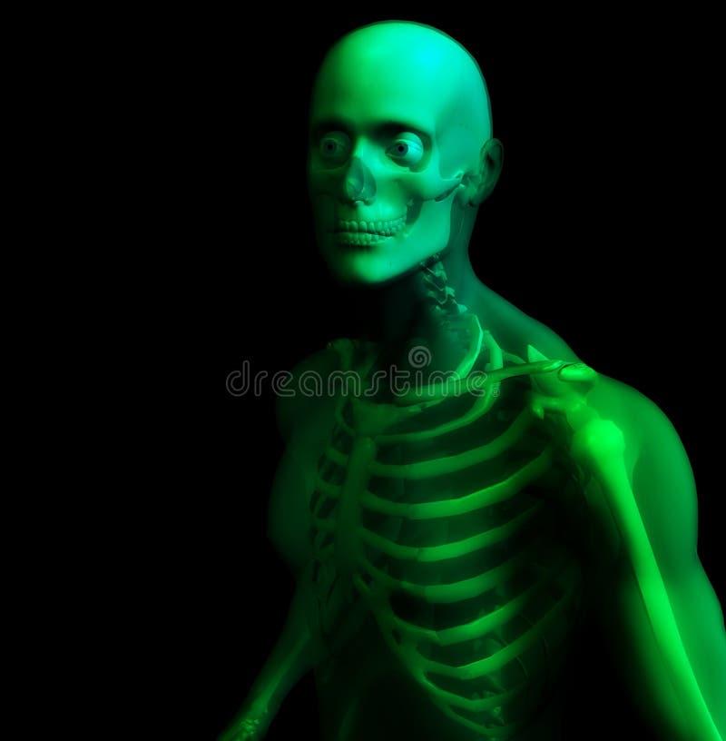 Mann-Knochen 16 lizenzfreie abbildung