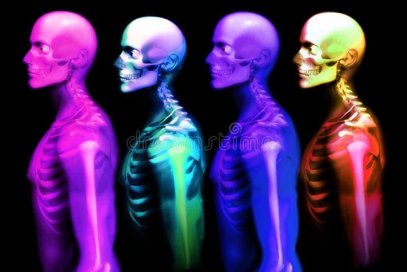 Mann-Knochen 24 lizenzfreie abbildung