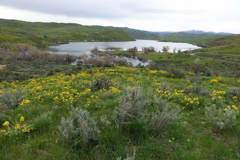 Mann Kreekreservoir, Idaho royalty-vrije stock foto's