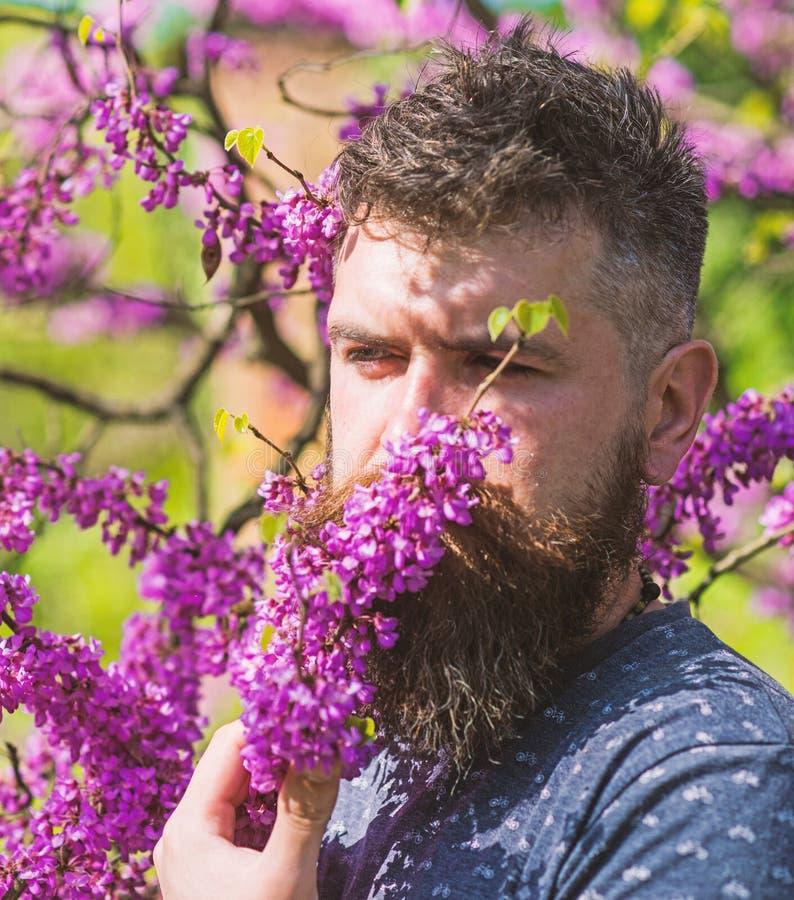 Mann mit Bart und Schnurrbart auf ruhigem Gesicht nahe Blumen am sonnigen Tag Hippie genießt Aroma der violetten Blüte parfümerie stockbild