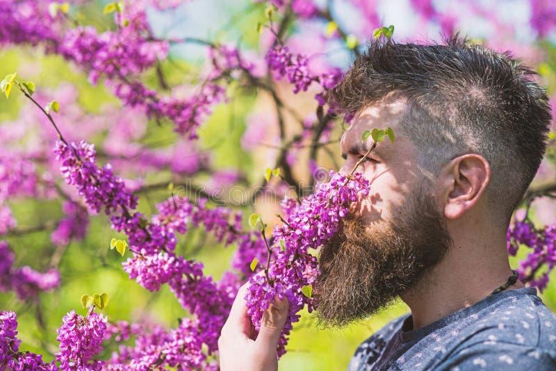 Mann mit Bart und Schnurrbart auf ruhigem Gesicht nahe Blumen am sonnigen Tag Parfümerie und Duftkonzept Bärtiger Mann mit stockfotografie