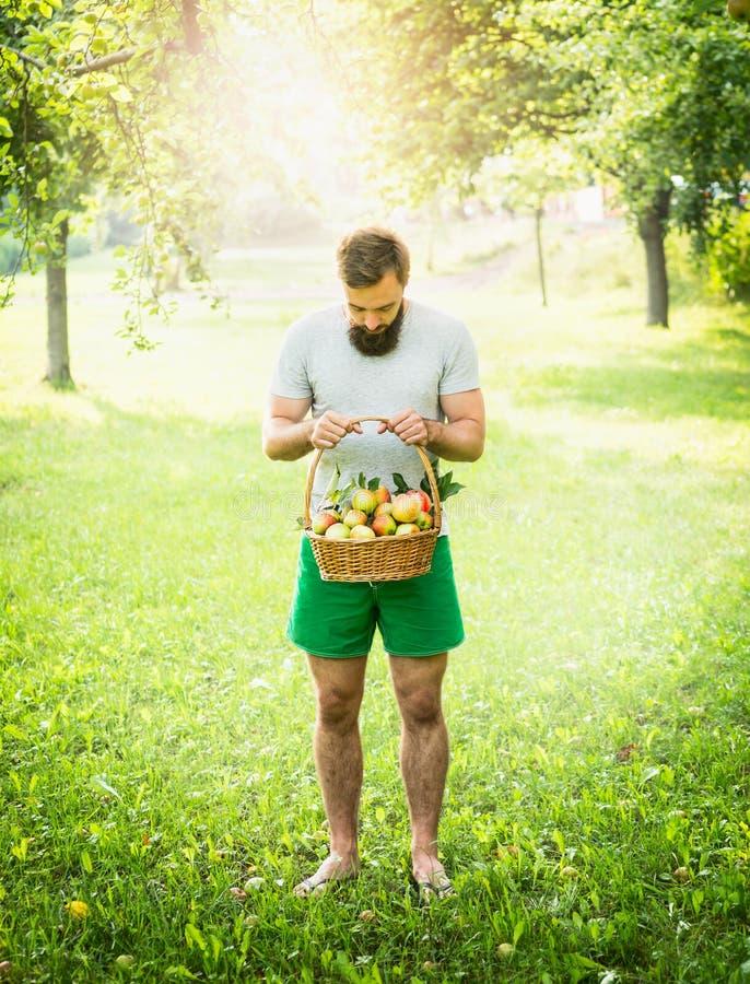 Mann mit einem Bart und hält einen Korb von Äpfeln im Hintergrund des Solarhintergrundes lizenzfreie stockfotografie