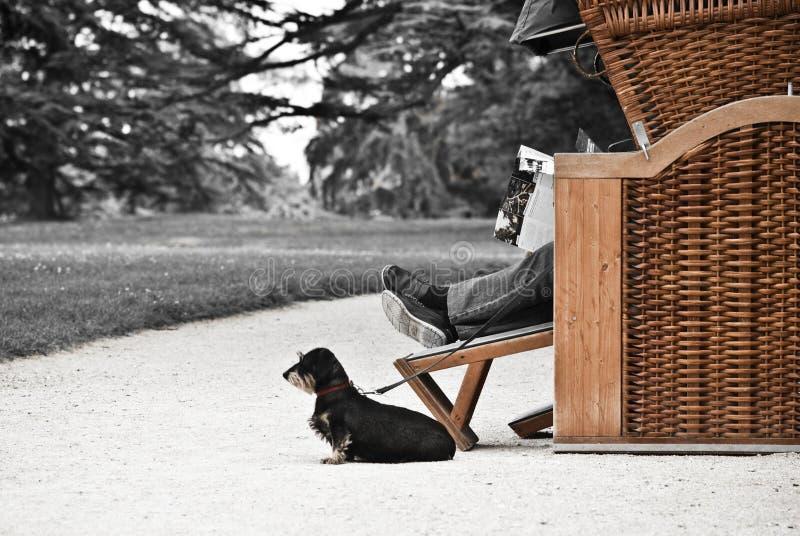 Mann mit Hund stockbild