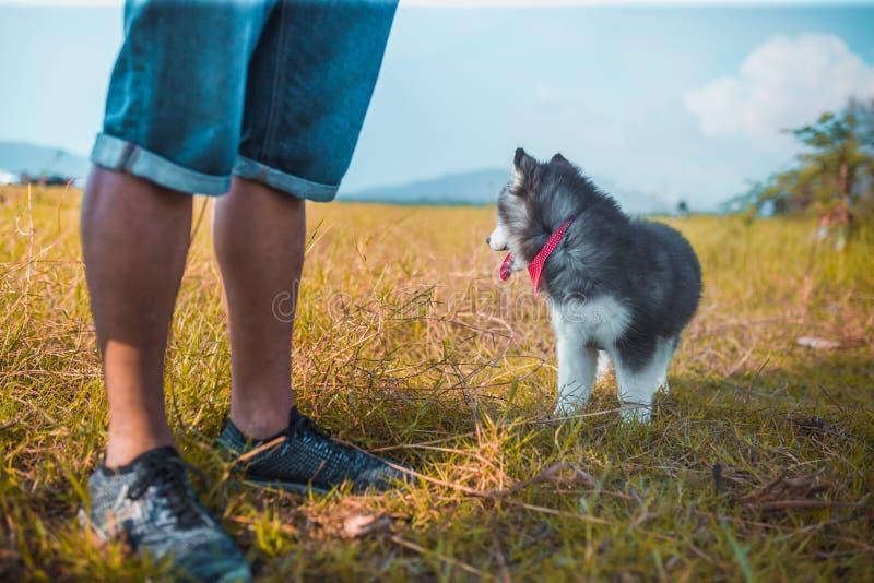 Mann mit Hund des Haustier-sibirischen Huskys lizenzfreies stockbild