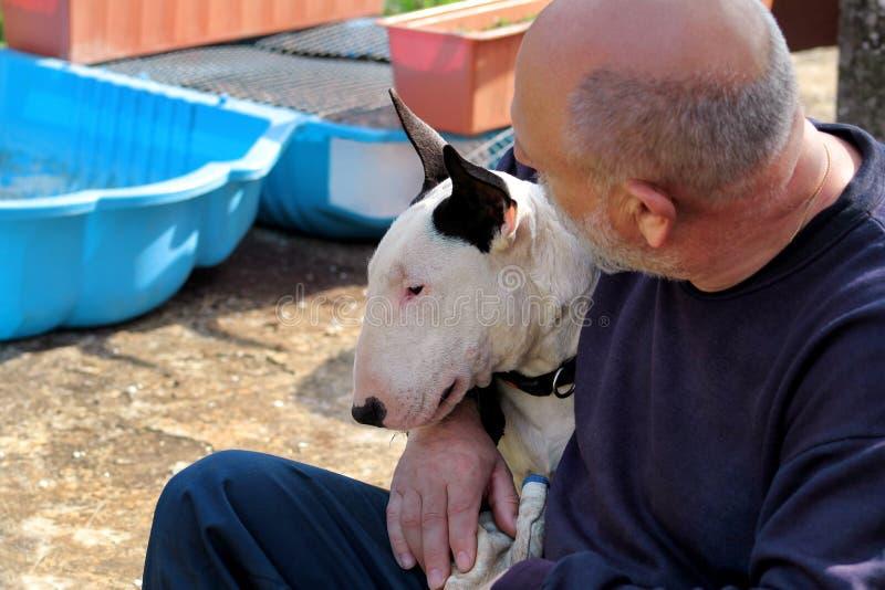 Mann mit Hund Weißer Hund des englischen Bullterriers in Gesellschaft seines Eigentümers, der im Garten im Freien und im Liebkosu stockfoto