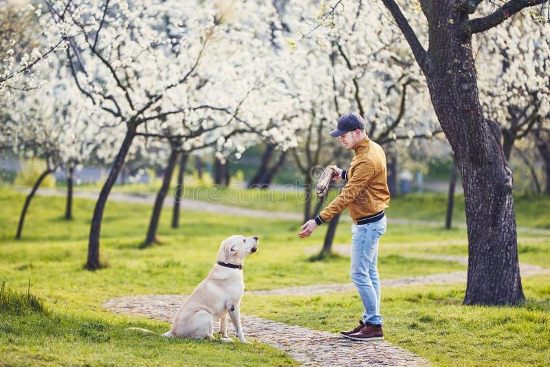Mann mit Hundeim frühjahr allgemeinem Park lizenzfreie stockfotos
