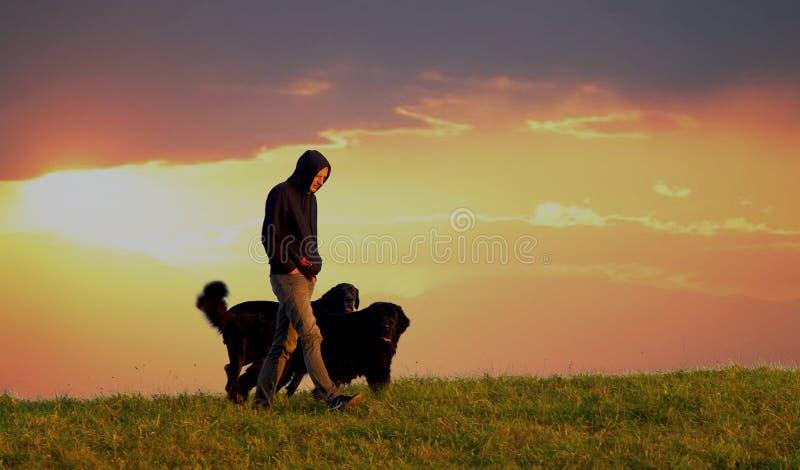 Mann mit Hunden stockfotos