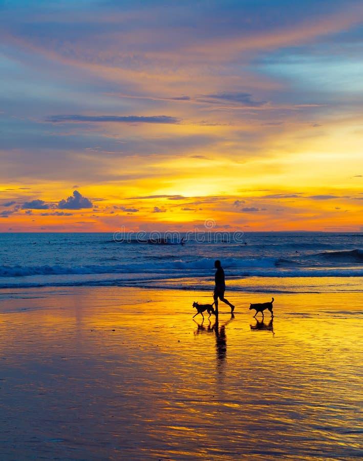 Mann mit Hunden auf Strand stockbild