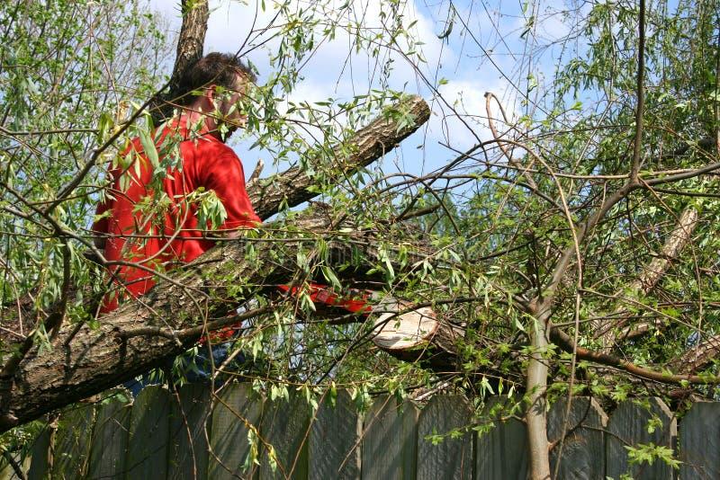 Mann mit Kettensäge in gefallenem Weide-Baum stockbild