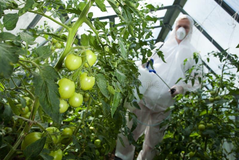 Mann mit Spray für Tomaten stockbilder