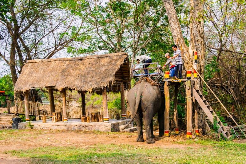 Mann reitet Elefanten auf Weg an der Landschaft, Mahoutfahrt dieses Tier für Reise, Vietnam stockfoto