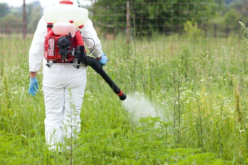 Mann in Sprühherbizid der schützenden Arbeitskleidung auf Ragweed Unkrautbek?mpfung stockfotos