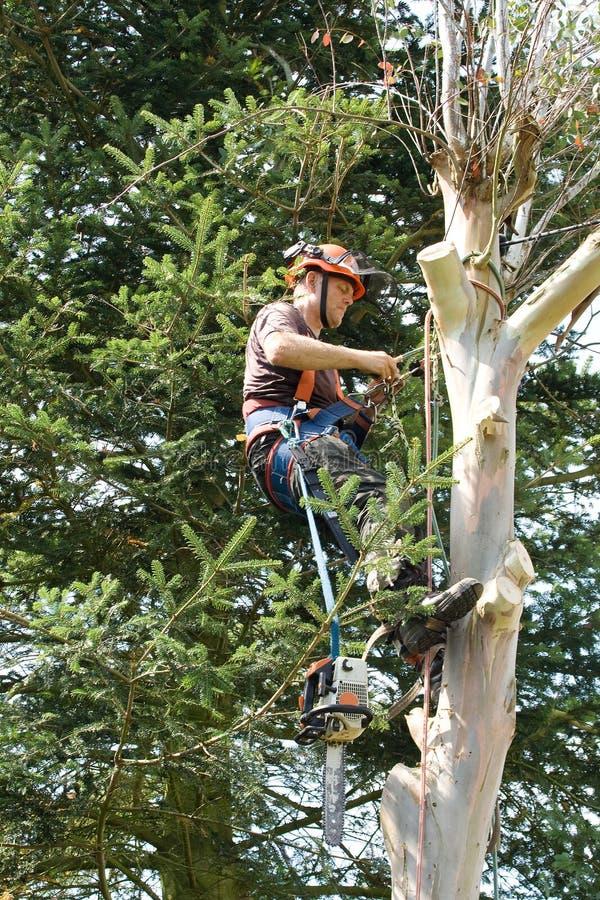 Mann teilgenommen an Holzschlagbaum stockfoto