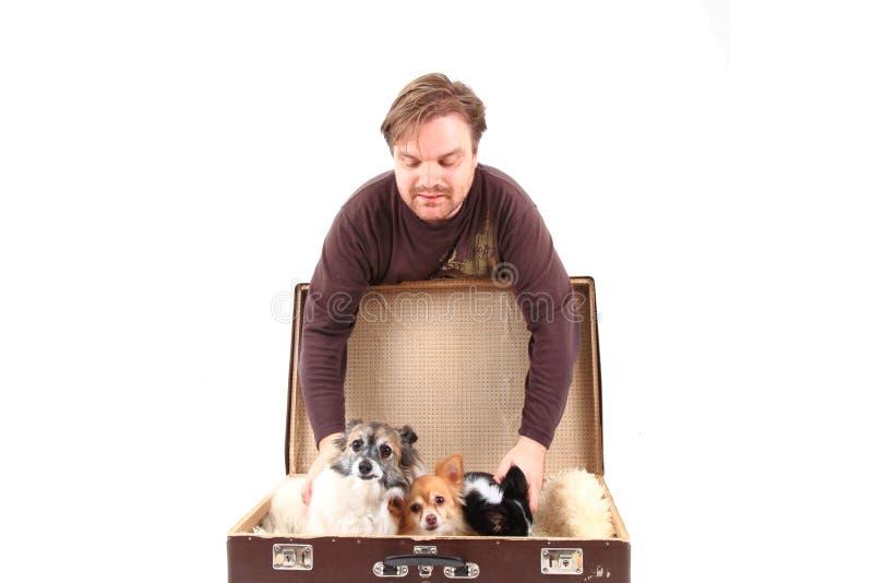 Mann- und Chihuahuahunde im Koffer stockfoto