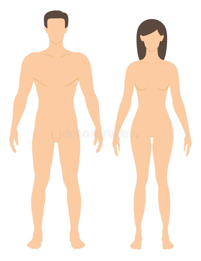 Mann und Frau vektor abbildung. Illustration von weiß - 20811658