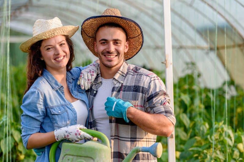 Mann und Frau, die organisches Gemüse am Gewächshaus wachsen stockfoto