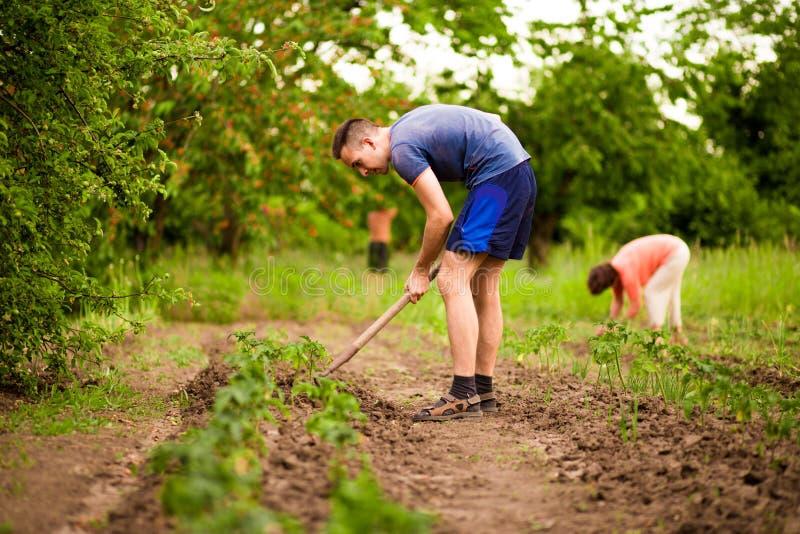 Mann und Frau, grabend und schaufeln im Garten, Arbeit im Hinterhof stockfotografie