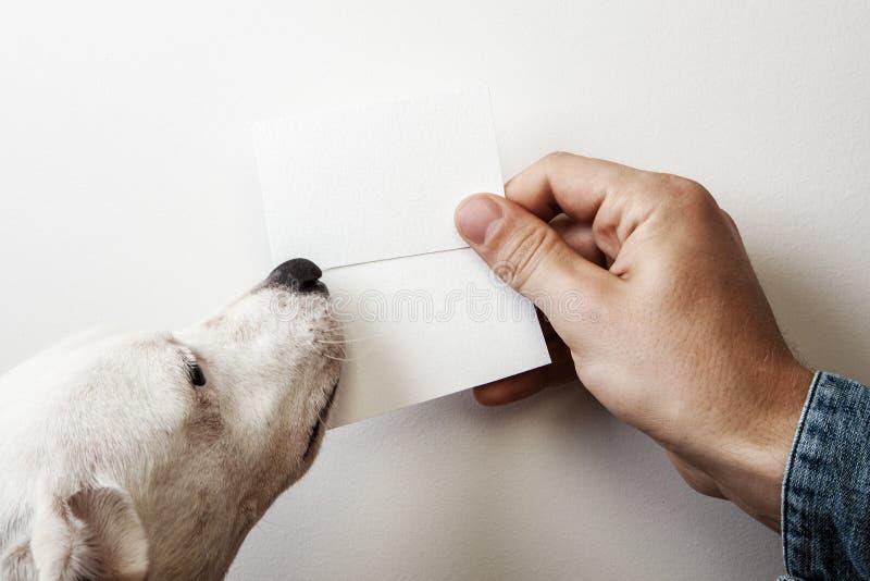 Mann und Hund, die an zwei wite Visitenkarten halten lizenzfreies stockfoto