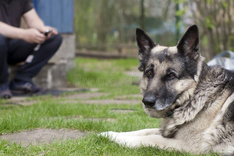 Mann und Hund im Garten lizenzfreies stockbild
