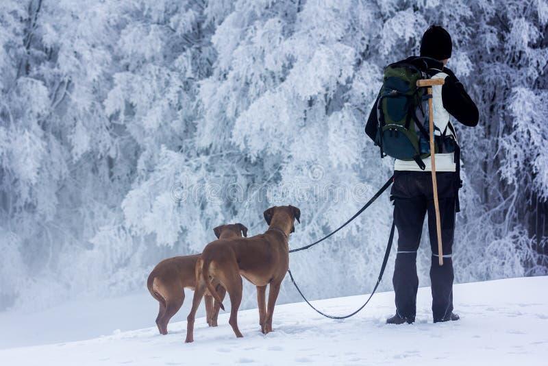 Mann und Hunde, die auf Schnee auf sehr kalter Landschaft gehen stockfoto