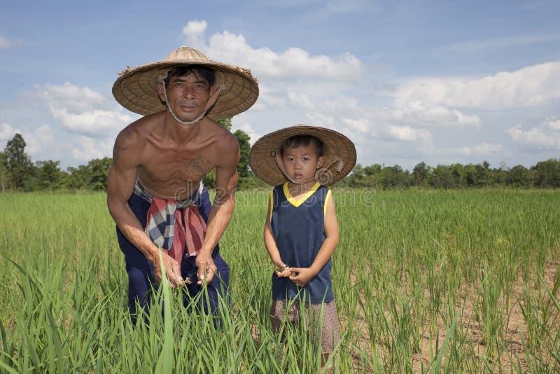 Mann und Kind im Reispaddy, Thailand stockfotografie
