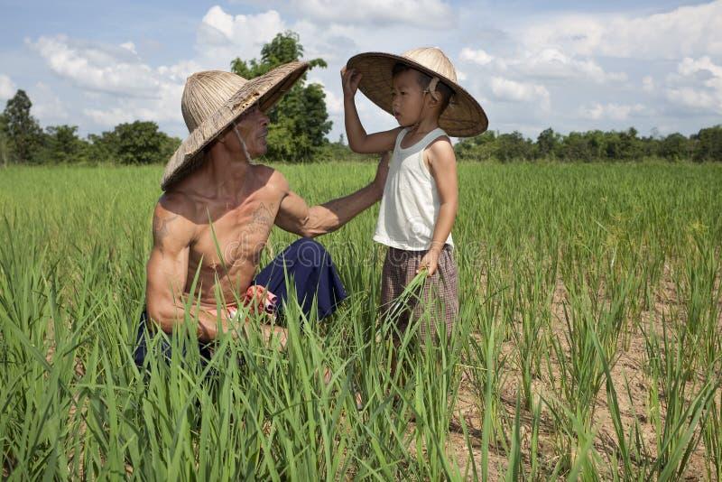 Mann und Kind im Reispaddy, Thailand stockbild