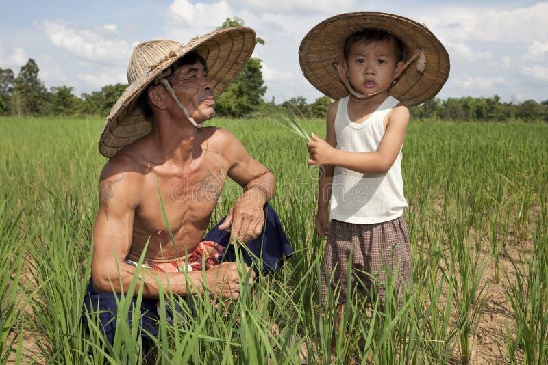 Mann und Kind im Reispaddy, Thailand lizenzfreie stockfotos