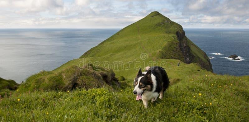 Mann und seine Hunde, die auf Mykines wandern stockfotografie