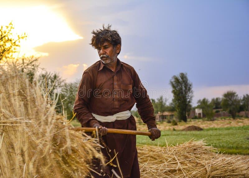 Mannarbeiter, der Weizen erntet lizenzfreies stockbild