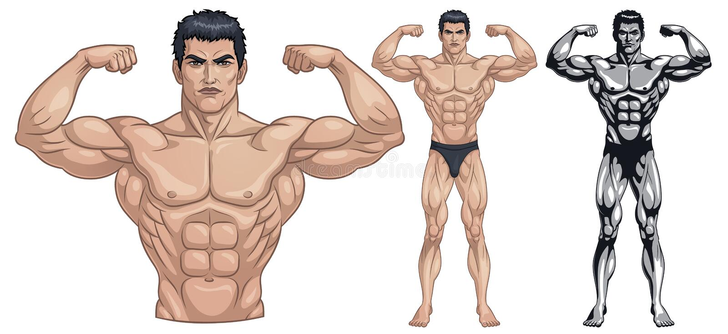 Mannelijk Bodybuilder Volledig Lichaam royalty-vrije illustratie