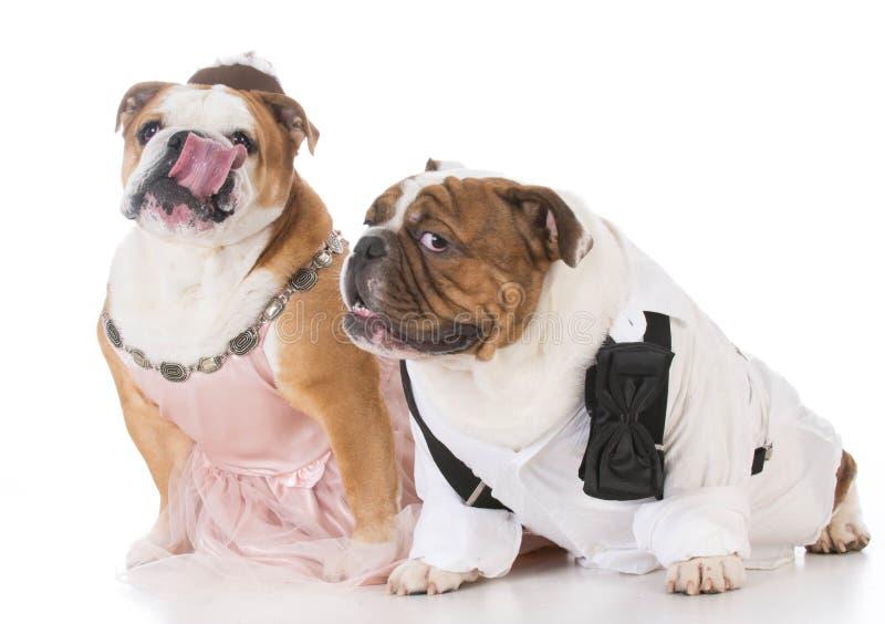 mannelijk en vrouwelijk hondpaar royalty-vrije stock fotografie