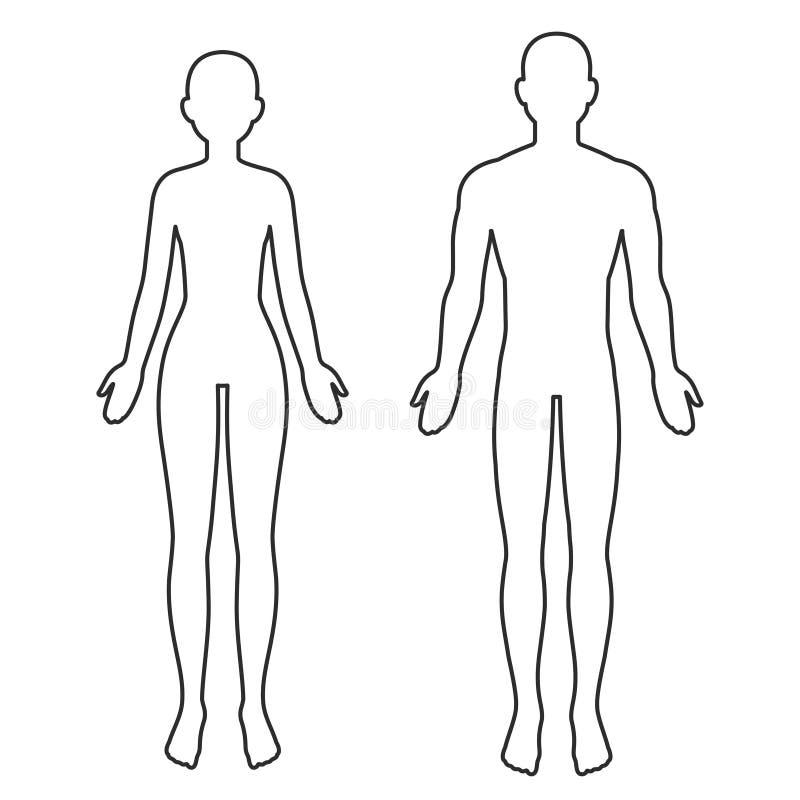 Mannelijk en vrouwelijk lichaamsoverzicht royalty-vrije illustratie