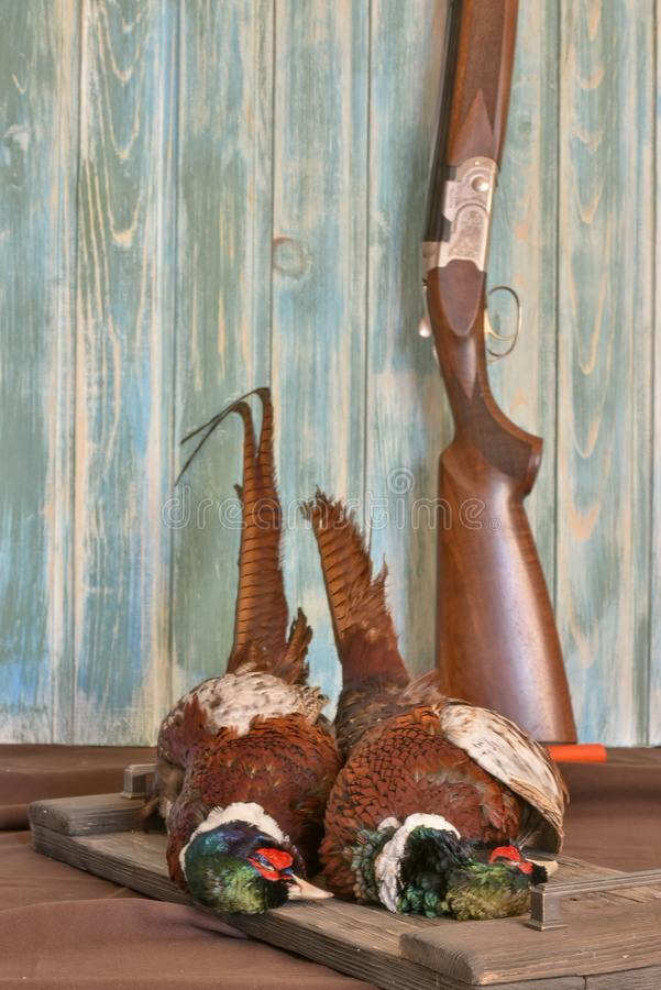 Mannelijk Fazanten en kanon op een oude houten achtergrond Jachtseizoen royalty-vrije stock afbeeldingen