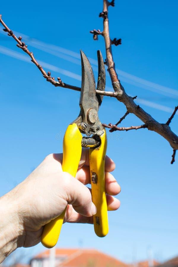 Mannelijk hand het snoeien fruit vóór begin van de lente royalty-vrije stock afbeeldingen
