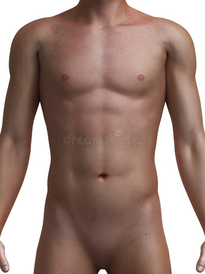Mannelijk lichaam stock illustratie