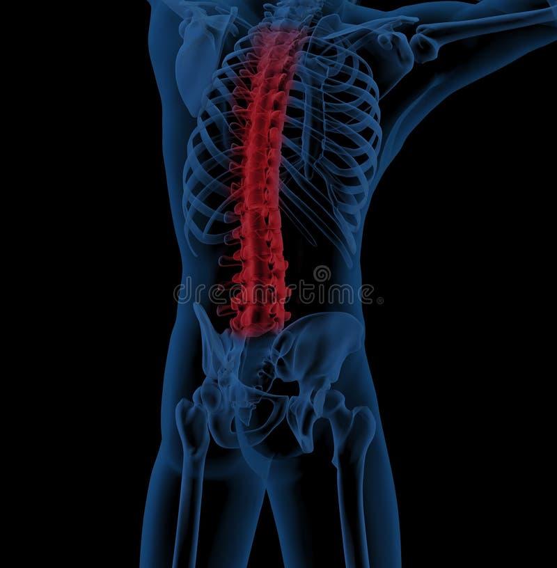 Mannelijk skelet met benadrukte stekel stock illustratie