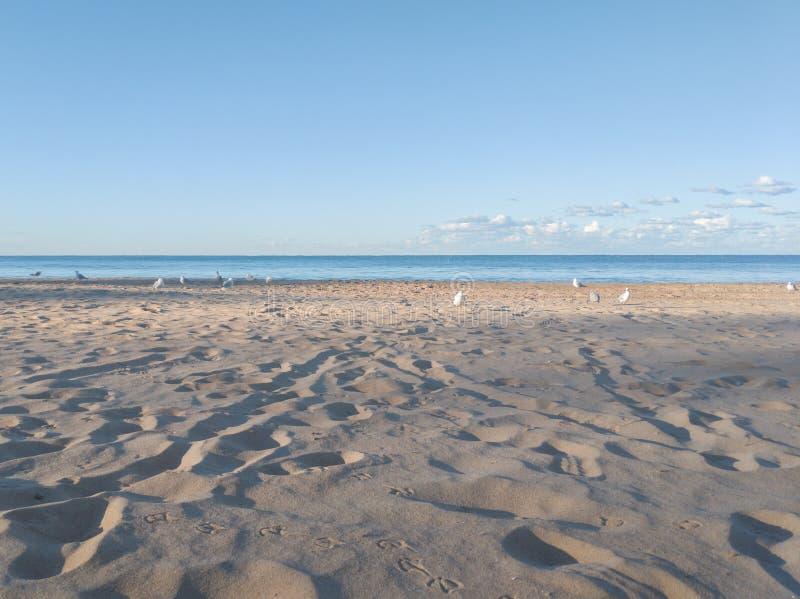 Mannelijk Strand, Sydney, duidelijke blauwe hemel, meeuwen en voetafdrukken in het zand royalty-vrije stock afbeeldingen