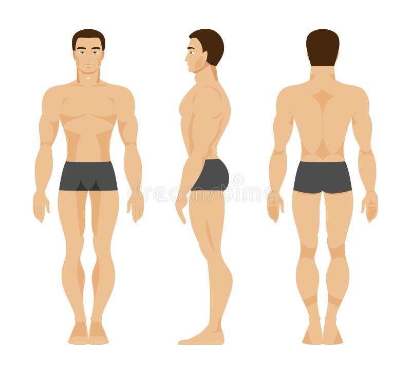 Mannelijke anatomie Vector illustratie stock illustratie