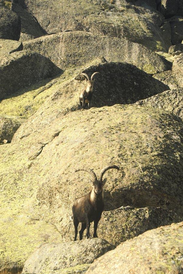 Mannelijke berg stock afbeelding