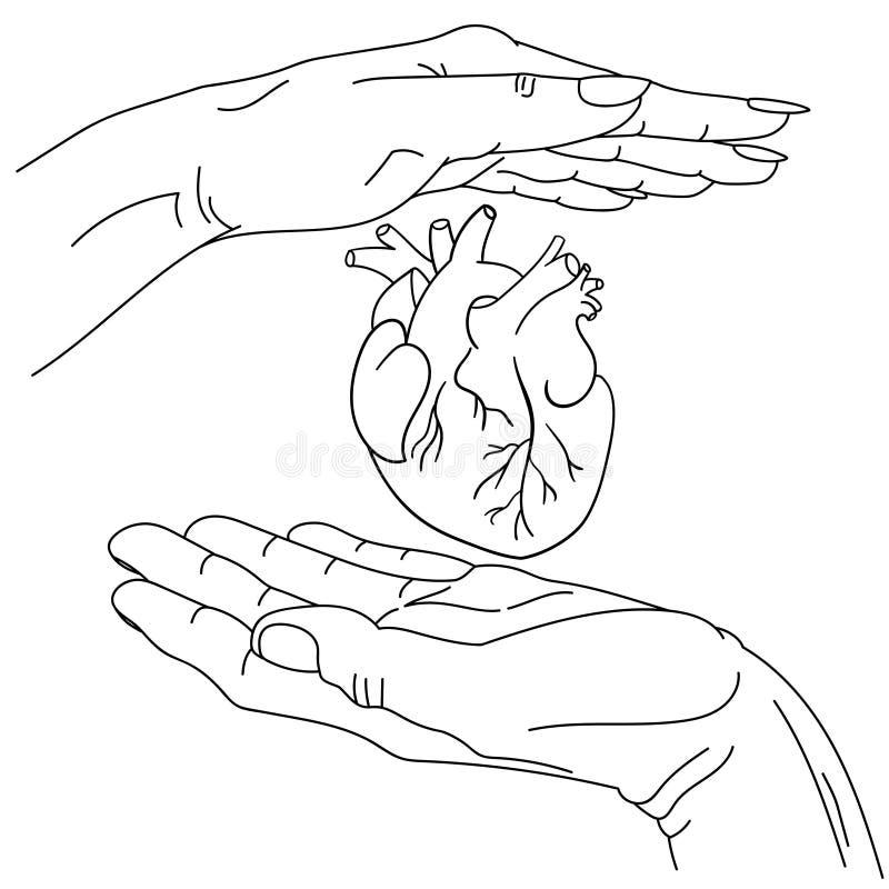 Mannelijke en vrouwelijke hand en anatomisch hart daartussen vectorlineaire afbeeldingen, met de hand getekend symbolisch beeld v vector illustratie