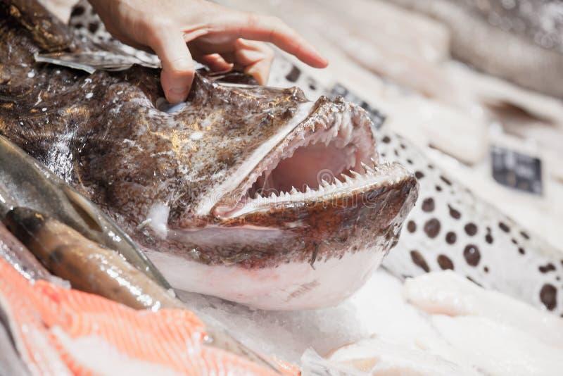 Mannelijke hand die vissersvissen opheffen royalty-vrije stock foto's