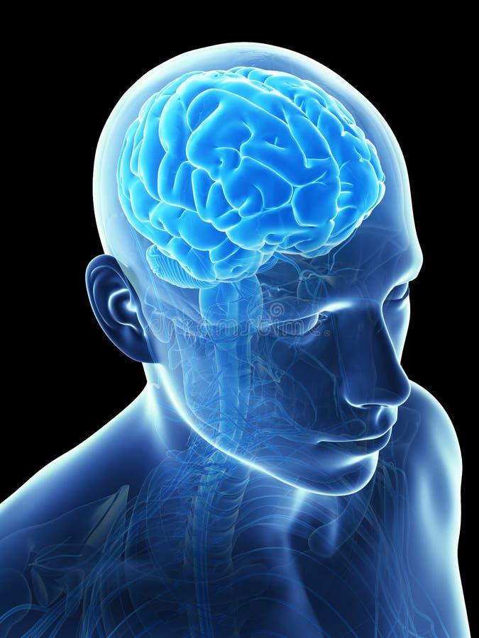 Mannelijke hersenen stock illustratie
