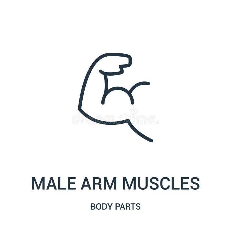 mannelijke het pictogramvector van wapenspieren van lichaamsdeleninzameling Dunne van het de spierenoverzicht van het lijn mannel stock illustratie