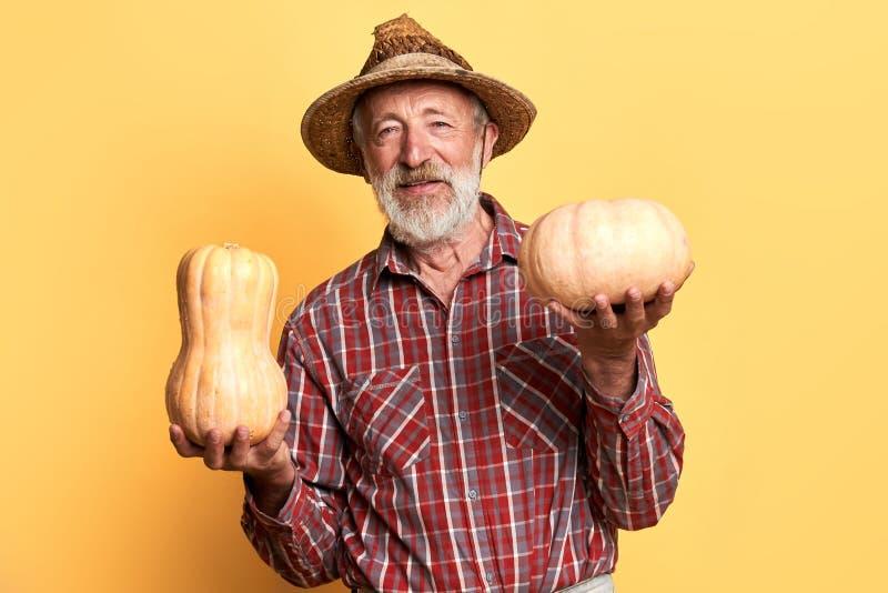 Mannelijke landbouwer met rimpels en grijze baard, tribunes met pompoenen in beide handen stock foto's