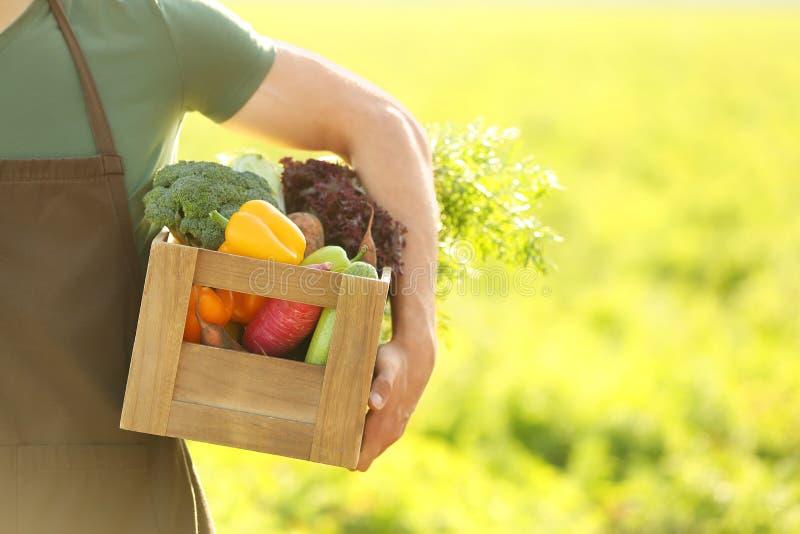 Mannelijke landbouwer met verzamelde groenten op gebied, close-up stock foto